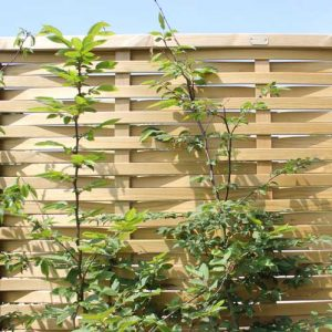 Jacksons Woven Style Fence Panels from Maiford Fencing